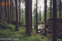 Ginzling Wald