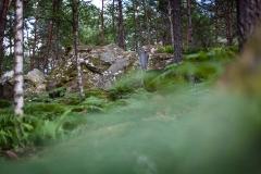 Fonatainebleau - Fotos von Fabian Klindt von http://hugsforhikers.com/blog/