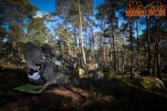 Fontainebleau / Rocher aux Oiseaux